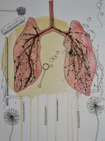 Lungs by pubescent