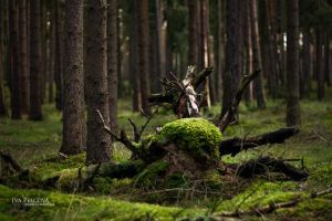 Forest Beings I. by ivya-cz