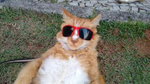 Cool Cat of Sao Conrado by TheDrifterWithin