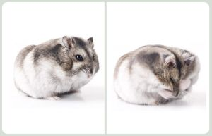 My Hamster by L2design