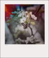 IPhoneography, Candida by Gerald-Bostock