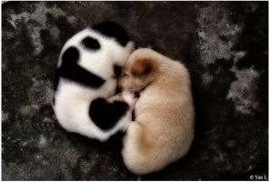 Yin and yang by Yair-Leibovich
