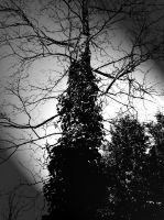 A sky full of branches... by ansdesign