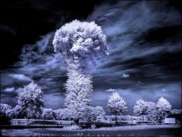 Mushroom Tree infrared... by MichiLauke