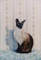 The Siamese - Acrylic Painting by AstridBruning
