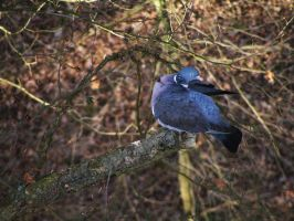 The Blue Dove by IannaBaskerville