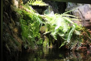 Water Ferns 2 by firenze-design
