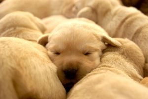 Sierra puppies 6 by ManicMechE