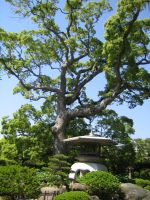 Tree in Japan by RockabillyRebel87