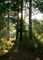 Forest-path by mikeloveridge