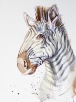 Watercolor Wednesday - Zebra by AJNazzaro