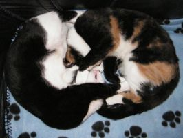 Cat YingYang by YesOwl