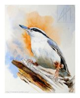 Nuthatch by ramdens