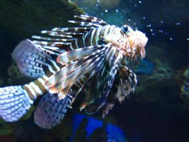 Lionfish by abuseofstock