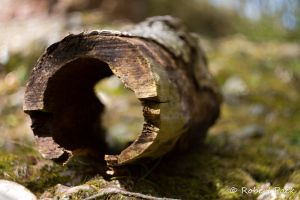 Glen Esk 24 - Hollow Log 3 by pakman