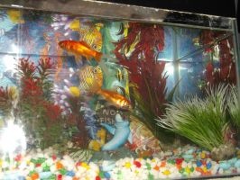my new gold fish by kk20152d