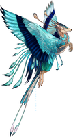 Indian Roller Feonix adopt by Tatchit