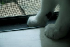kitty toes by Fayde2Memory