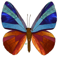 Textures Butterfly by L1ghttAng3ll