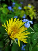 little blue and big yellow bro by terrordrome1