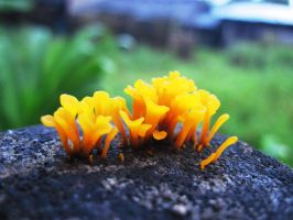Fungi by Jhung2x