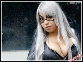 Black Cat by DesignerPhoto