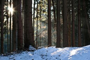 Forest in Winter 2009 by yourstock