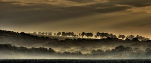 Foggy Morning III by Hellweg