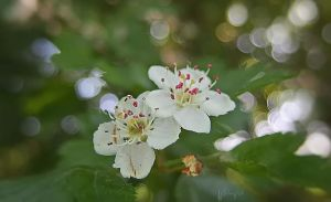 Blossoming by Weissglut