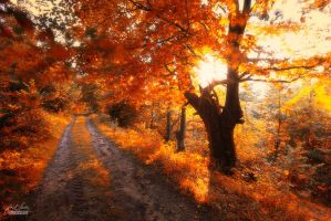 -Be on the road with warmly thoughts- by Janek-Sedlar
