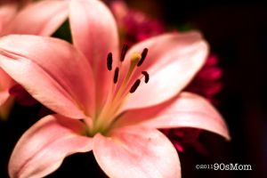 Pink by cmsfk70