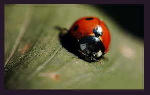 Lady bug - 3 by Nataly1st