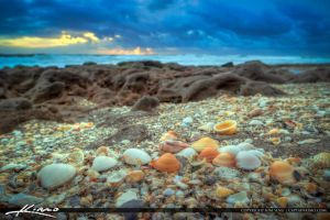 Seashells-at-Beach-in-Coral-Cove-Park-Florida by CaptainKimo