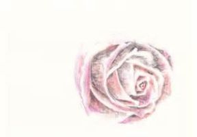 Roses by loubylili