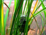 Froggy by AccentonPhotos
