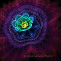 Night flower by manapi
