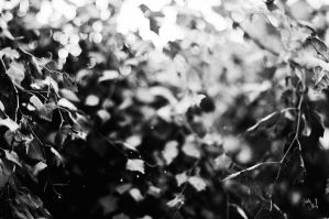 Leaves by isabelle-19