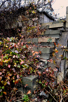 Stairs and Flowers by Cleansefoldmanipul8