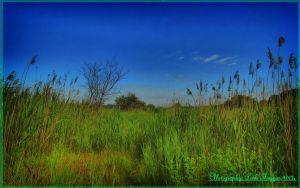 Hungarian landscapes.HDR-picture(photo series)16. by magyarilaszlo