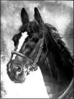 Ready....charcoal by Lynne-Abley-Burton