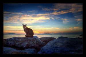 Sunset and a Cat by mutos