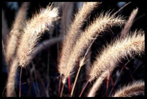 Cat Tails by Kaleena127
