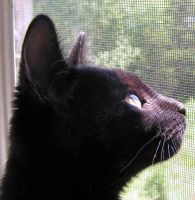 Screen Reflection on my Kitty by JocelyneR