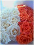 White and Coral Roses by Soup-girl