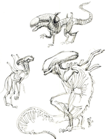 Xenomorph Sketches by Girl-on-the-Moon
