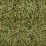 Meadow grass texture for Feralheart [FREE] by Mossasaurus