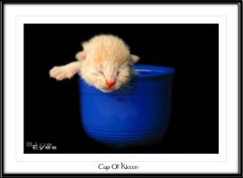 Cup Of Kitten - Revisted by shatterdrose