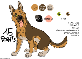 Mixed breed dog ~~ ADOPTED by RIOPerla