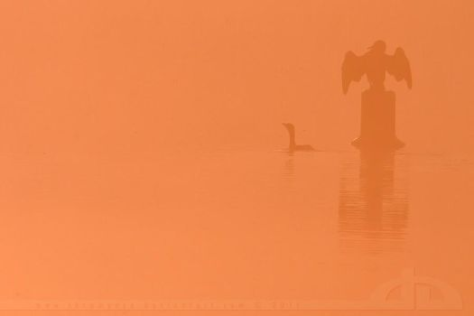 Cormorants in the Mist by thrumyeye