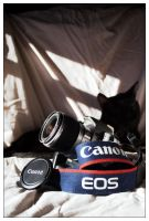 Cat not included by velenux